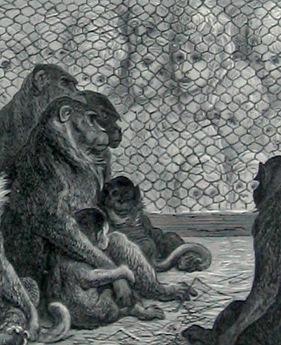 Gustave Doré in der Tradition der London – Reportage II: Scheußliches Paris [Gustave Doré in der Tradition der London – Reportage II: Scheußliches Paris] (Alexander Roob)